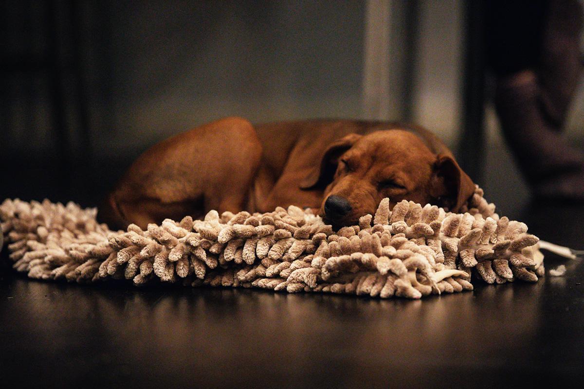 Corona-karantän: Vad gör vi och hundarna?