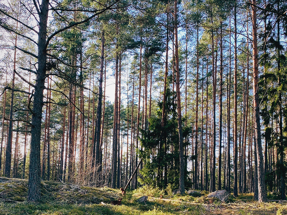 Hundar i skogen under karantän